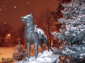 Памятник собакам. Зимнее вечернее фото