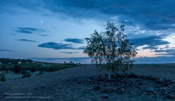 Фото березы на фоне закатного неба. Заповедник Аркаим