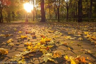 Осенние листья. Вот бы снова стать зелеными! Автозаводский парк