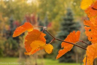 Краски осени в Автозаводском парке