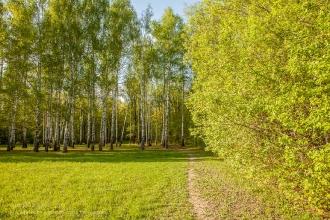 Роща Лучинник. Место проведения литературных фестивалей