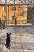 Портрет черной собаки. Улица Афанасьева. Нижний Новгород. Фото