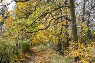 Правдинск. На берегу Лавы. Осеннее фото