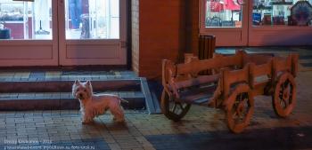 Вечерний Зеленоградск. Собачка ждет хозяина у магазина