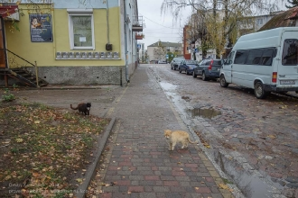 Багратионовские коты