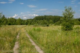 Дорога из Шаньково в Тимирязевку. Летнее фото