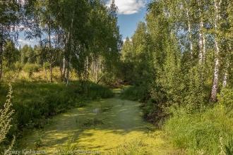 Старый пруд в поселении Копылиха. Фото